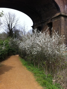 Blossoms viaduct shadow