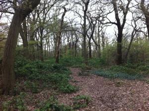 Horsenden Wood
